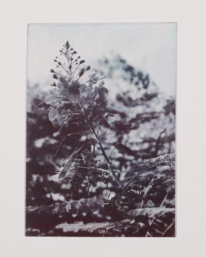 Flowers of Gomera