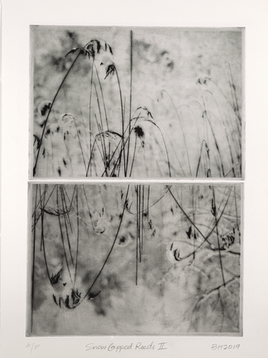 Snow Capped Reeds I & II (Diptych)