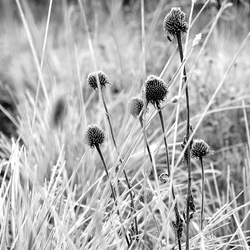 Crystalized Flora (Grasses)