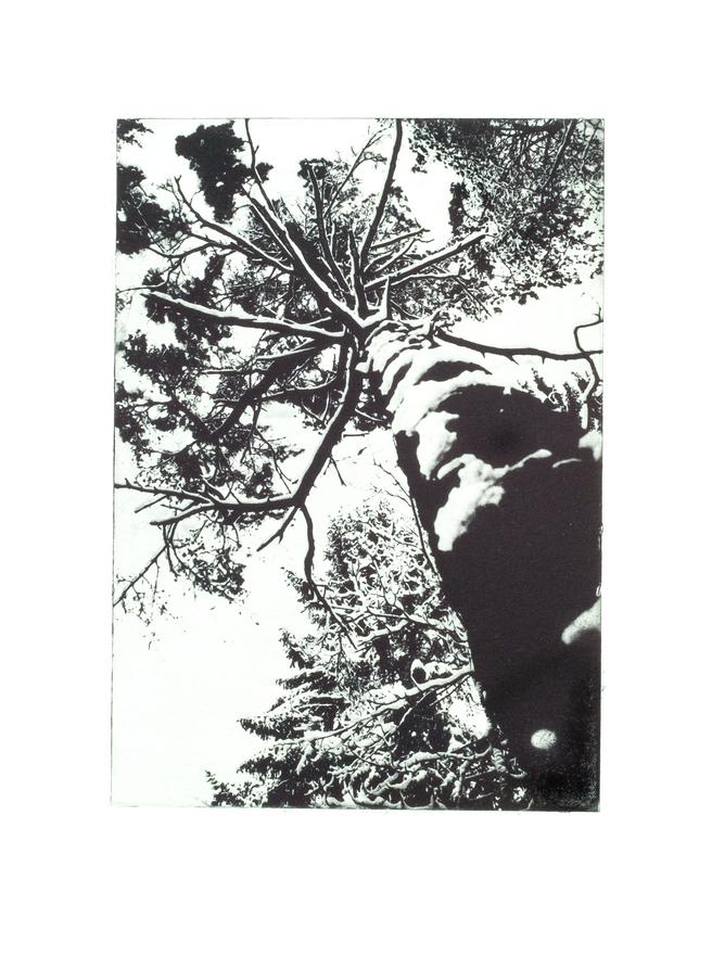 Treetops I