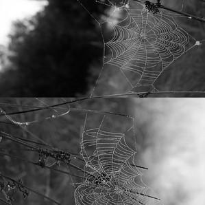 Web Diptych 1
