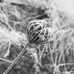 Crystalized Flora (Pod)