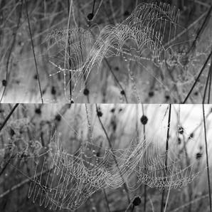 Web Diptych 2
