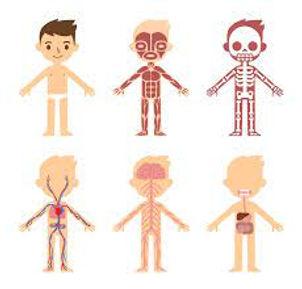 Human Body.jpg