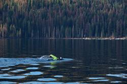 huntington lake_swim_164