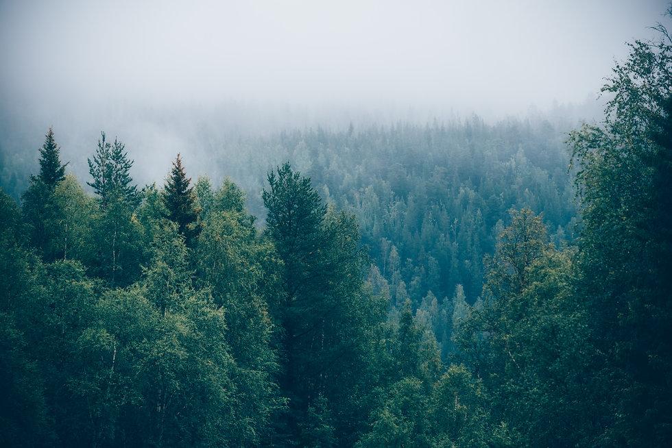 Pappet i vores æsker er genanvendeligt og FSC certificeret og kommer fra de svenske skove