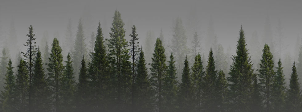 Sustainability Banner.jpg