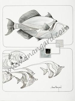 Baliste et poissons lune