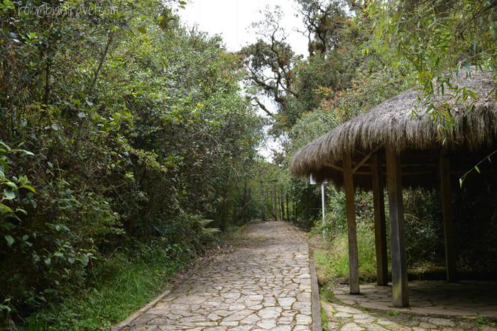 Camino al boquete de la Laguna de Guatavita