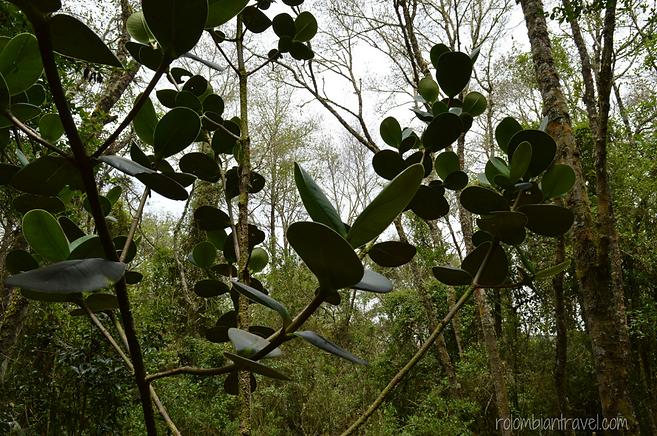 vegetacion laguna de guatavita