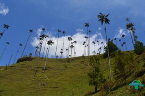 Valle del Cocorá, Quindío