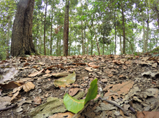 Bosque de robles en Parque Natural de Quininí (Cundinamarca)