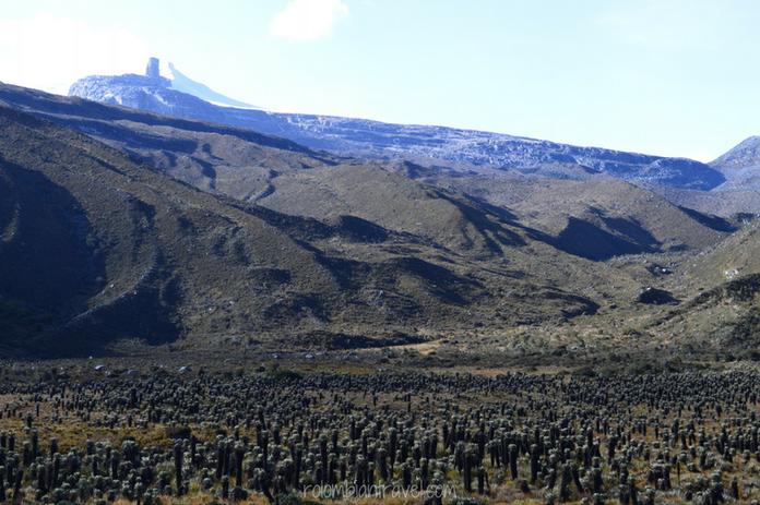 Valle de frailejones en PNN El Cocuy sendero Laguna Grande de la Sierra