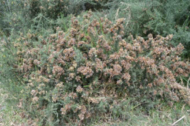 vegetacion en desierto de la tatacoita
