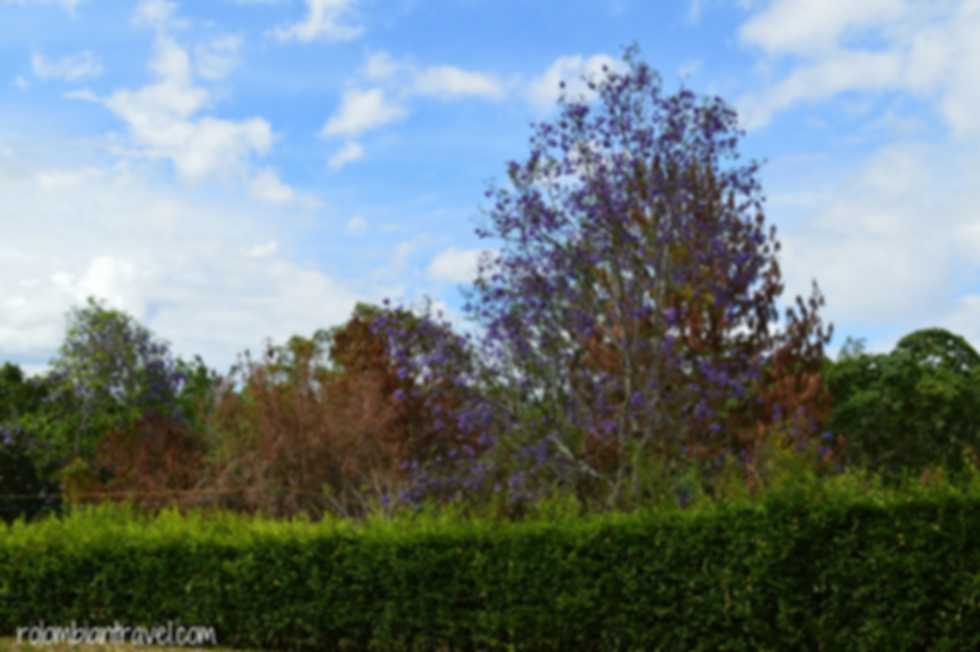 paisaje en cundinamarca