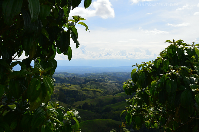 paisaje del eje cafetero colombiano