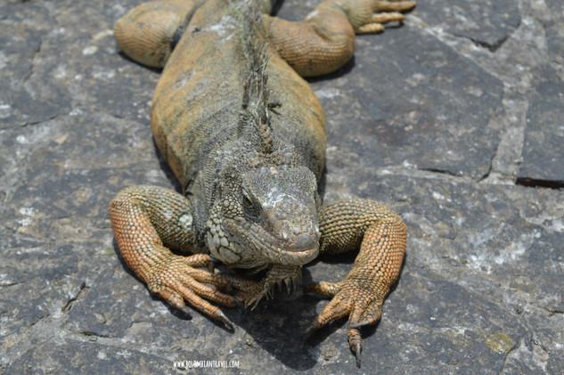 Parque de las Iguanas en Guayaquil, Ecuador