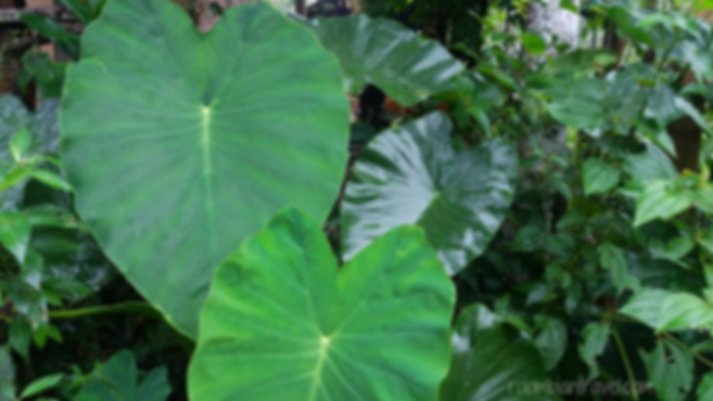 vegetacion en el fin del mundo putumayo