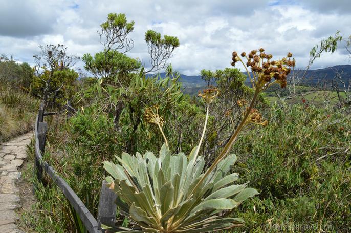 Vegetación Laguna de Guatavita