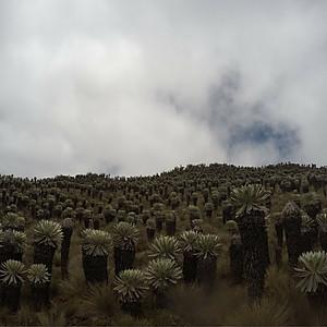 Páramo de Ocetá (Monguí, Boyacá)