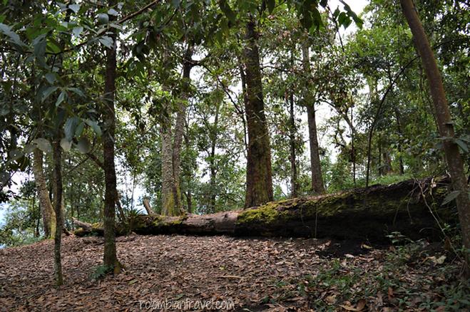 El bosque de robles en Parque Natural de Quininí en Cundinamarca
