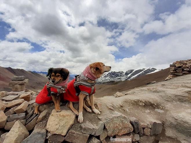 Perrodadores, perritas en la Montaña de Siete Colores en Perú