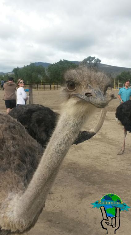 Granja de avestruces, Villa de Leyva