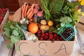 Have You Found Your CSA Yet?
