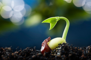 Chatham Area Public Library Hosts Seed Starting Lecture 04/29/2015