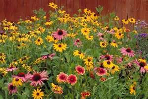 Illinois Native Plant Society Plant Sale 04/25/15