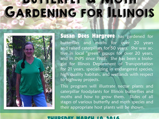 The Illinois Native Plant Society Presents: Butterfly & Moth Gardening for Illinois