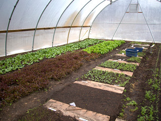 Winter Vegetable Gardening at Lincoln Land Community College Mondays, September 14-December 14 10:30