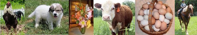 2016 Farm Events at Red Gate Farm - Classes and Clinics