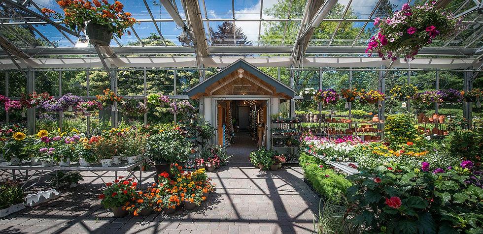 greenhouse21800.jpg