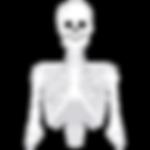 louvenn_squelette-blanc.png