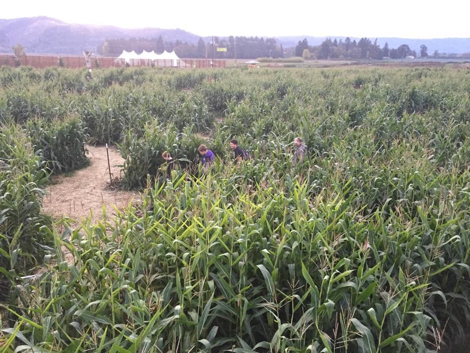corn maze #6