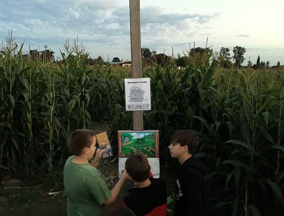 corn maze #2