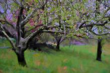 Spring in My Backyard