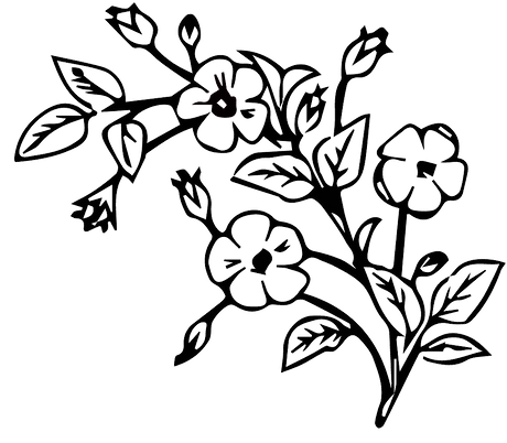 edited%20flower%20png_edited.png