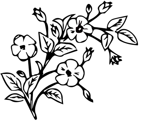 edited flower png.png