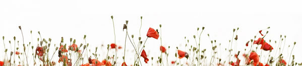 short poppy-flowers-border.jpg