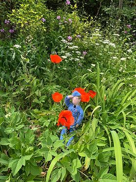 billy poppies.jpg