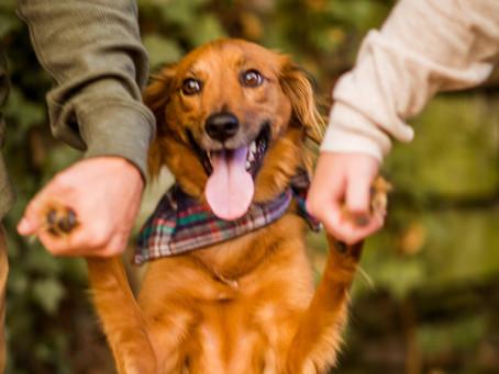 Meet My Sidekick, Rosie & Her Fav Pup Products
