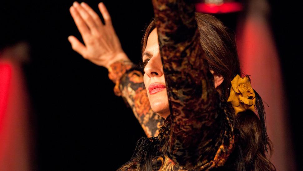 Flamenco Borealis