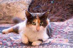 SAM assisted cat 2