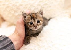SAM assisted kitten 1