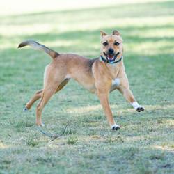 SAM assisted dog 1