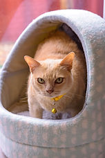 Goldie 01.jpg