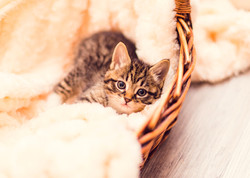 SAM assisted kitten 49_edited