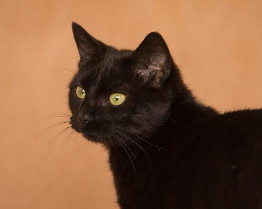 Black cat-0413 (Large).jpg
